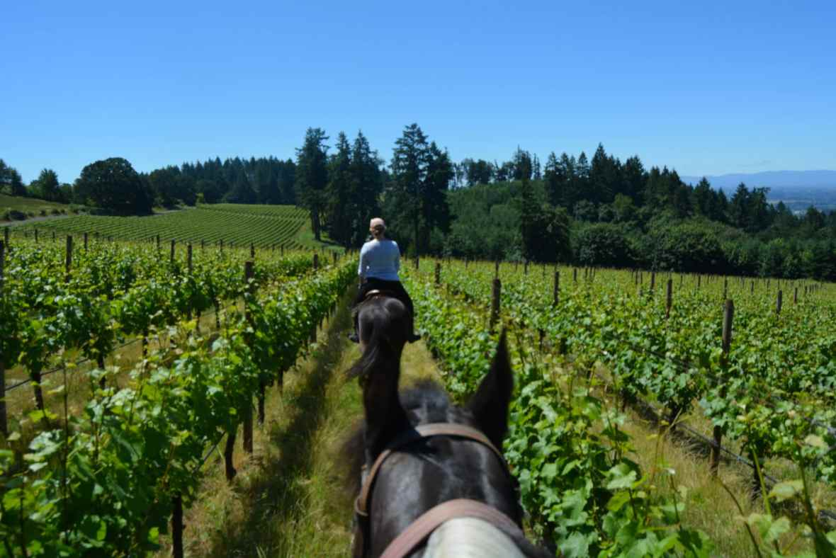 equestrian tour of oregon wine country
