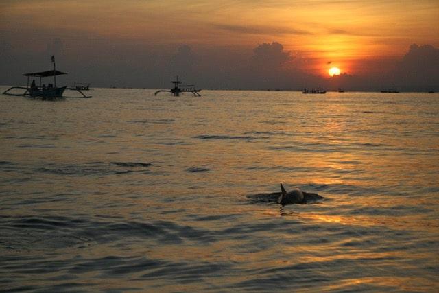 Bli, lovina, morning dolphin tour.