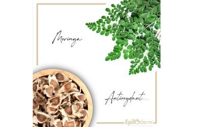 La Moringa, la petite plante aux grandes Vertus ? 🌿