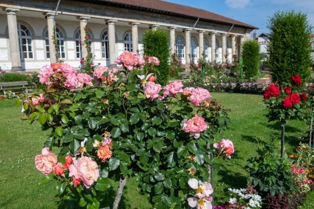 fleurissement-roseraie (11)