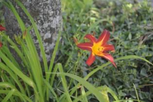 Fleurs Epinal (8)