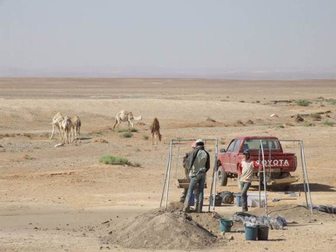 KHIV camels