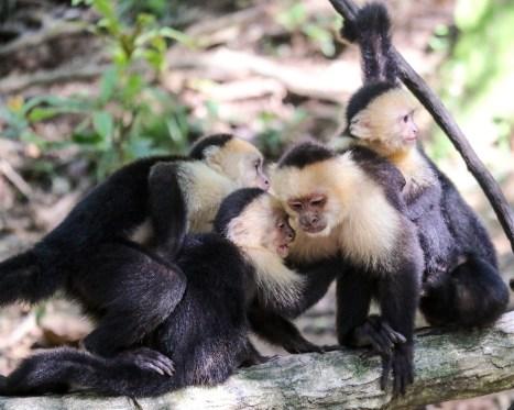 Roatan Monkeys (25 of 29)