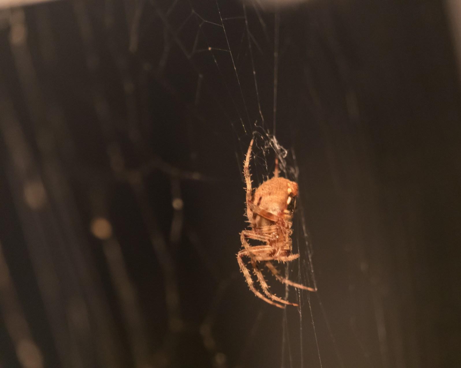 Spider_27AUG15-11
