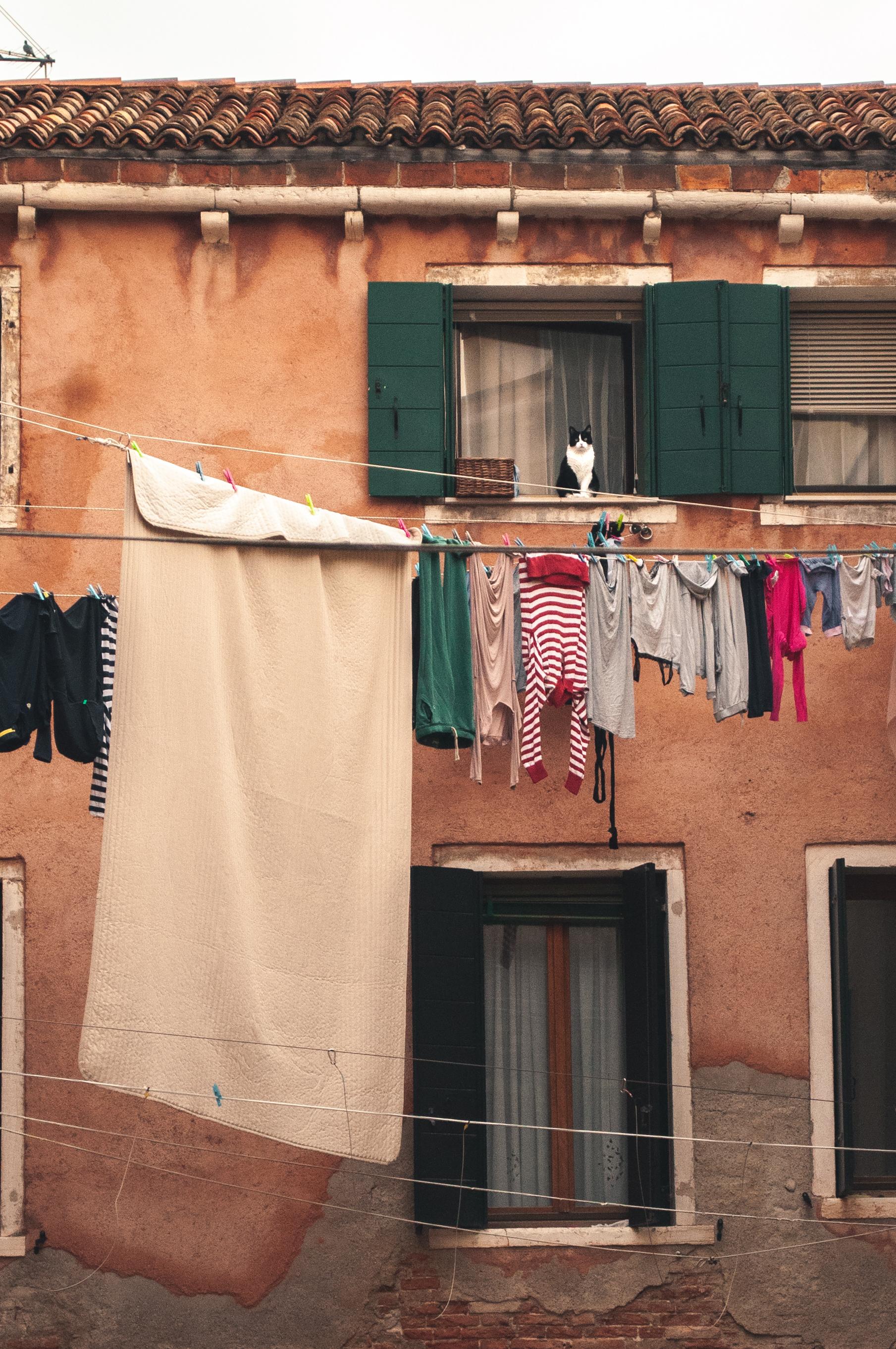 Katze und Wäscheleine in Venedig
