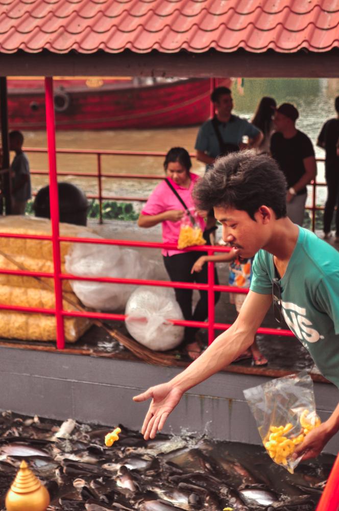 Catfish at Wat Phutthai Sawan