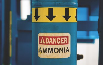 Hyperammonemia: Is It the Liver or Something Else?