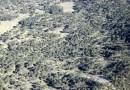 Talamontes poblanos arrasan ilegalmente el bosque Veracruzano del Parque Nacional Pico de Orizaba.
