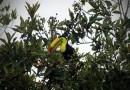 Llegan Tucanes a la zona de Huatusco