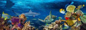 Korálové útesy: Kdo je obývá?