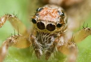 Jak zkřížit pavouka s uhlíkem?