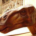 Vymřeli dinosauři, protože seděli na vejcích příliš dlouho?