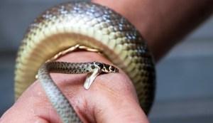 Pozor na hadí uštknutí
