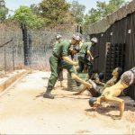 Kokosová věznice: 100 způsobů smrti ve vietnamském pekle!