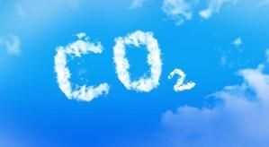 Sázení stromů kompenzuje produkci uhlíkových emisí