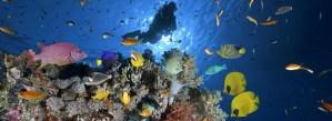 Podmořské rajské zahrady: 10 nejkrásnějších korálových útesů světa