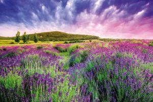 Provence: Kraj tisíce barev
