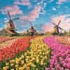 Největší Nizozemská slavnost: Nejen tulipány!