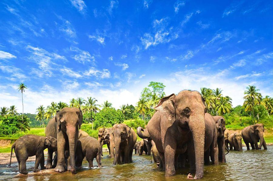 Pohádková Srí Lanka