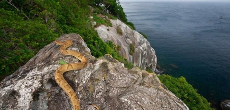 Ilha da Queimada Grande: Na tenhle ostrov nechcete! Je plný jedovatých hadů
