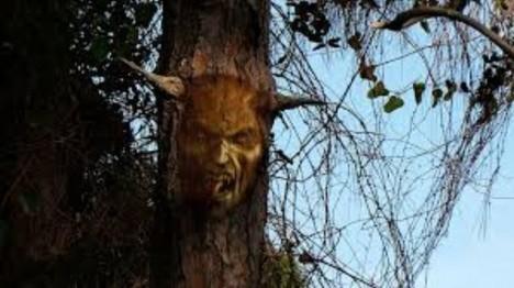 ďáblův strom
