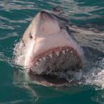 Dovolené se blíží: Bojíte se žraloků?