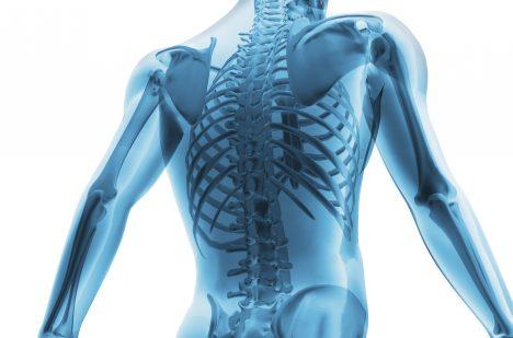 10. Ačkoliv jsou kosti silnější než ocel, jsou z 30 % tvořeny vodou.