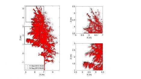 Laserové měření ukázalo, že větve bříz bělokorých padají až o 10 cm.