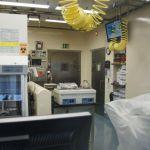 Děsivé podezření: Zrodil se virusHIV vamerických laboratořích?