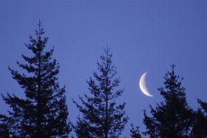 Země bez Měsíce? Vývoj by šel zcela jiným směrem