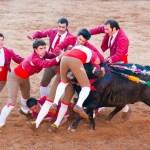 Forcados vakci: Muži beze zbraní proti rozzuřenému býkovi