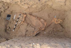 Sbohem, drahý koni: Neobyčejný hrob v údolí Nilu