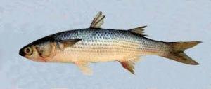 Stovky mrtvých ryb přineslo oteplení vody v Jižní Kalifornii