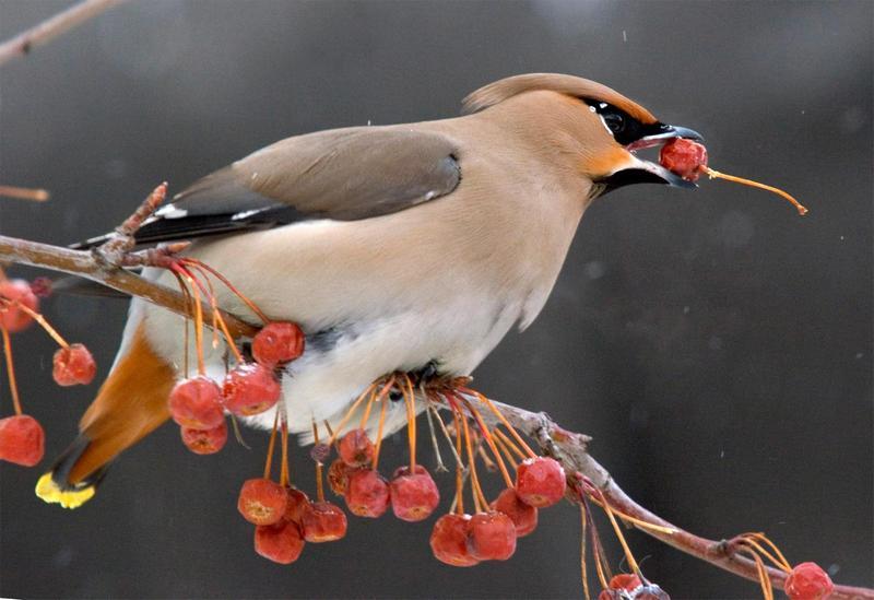 Dospívající milují ptáky