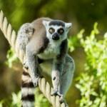 Ostravská zoo, moravský unikát!