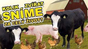 VIDEO: Kolik zvířat sní člověk za život?