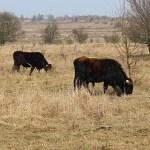 Vzácné rostliny se pomalu vrací do české krajiny