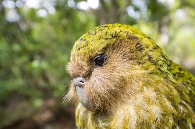 velké ochablé ptáky