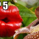 Neuvěřitelné rostliny: Co dokážou?