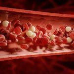 Vzácná krev: Jak funguje vnašem těle?