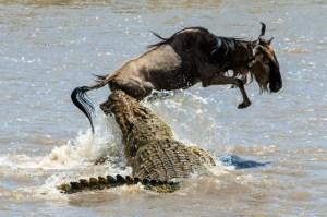 Kousnutí, které přepůlí buvola: Která zvířata mají nejsilnější stisk čelistí?