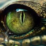 Neroňte krokodýlí slzy! Co máme společného se zubatými plazy?