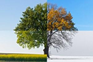 Čtyři je málo, nebo moc? Kolik je skutečně ročních období?