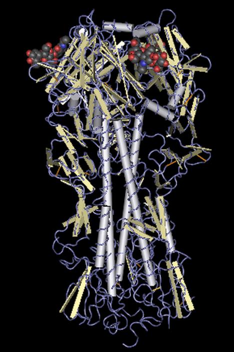 4Hemagglutinin_molecule
