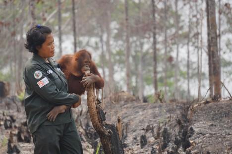 5 - Orangutani jsou kriticky ohroženým druhem