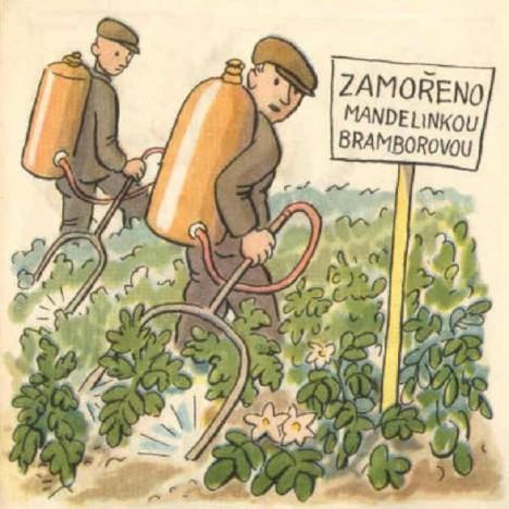 Bramborová pole vyžadují ošetření proti hmyzu, což se stane i námětem propagačních kreseb.