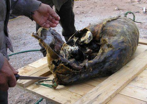 Štědrovečerní tabule vGrónsku není nic pro slabé povahy. Ostrované si dopřávají tradiční vánoční pokrmy zvané mattak (syrová kůže zvelryby svrstvou podkožního tuku) akiviak (lachtan nadívaný alkami, které se vjeho útrobách nechají přibližně sedm měsíců uležet). Jde prý onáramnou pochoutku.