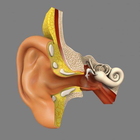 Náš smysl pro rovnováhu je zajišťován vestibulárním systémem ve vnitřním uchu a poskytuje nám důležitou zpětnou vazbu o poloze hlavy a všech pohybech. Kinetické čidlo se skládá ze tří kanálků naplněných tekutinou. Na jejich konci jsou svazky tenkých vlasových buněk. Při každém pohybu hlavou zatlačí tekutina na vlásky, které se ohnou a vyšlou do mozku signál o pohybech hlavy.