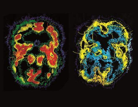Dva snímky mozkové činnosti ve spánku ukazují rozdíl mezi takzvanou REM fází a NREM fází. Podle nových výzkumů se nám mohou sny zdát v obou případech.