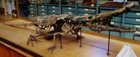 Před několika desítkami milionů let se na území severních Čech nalézalo veliké sladkovodní jezero obklopené subtropickým pralesem. Na jeho březích se povalovali tito dva metry dlouzí aligátoři druhu Diplocynodon.